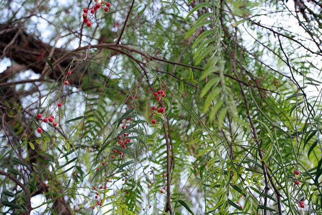 Горчичное зерно и дерево - что имел в виду Иисус (7)