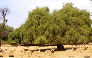 Горчичное зерно и дерево — что имел в виду Иисус?